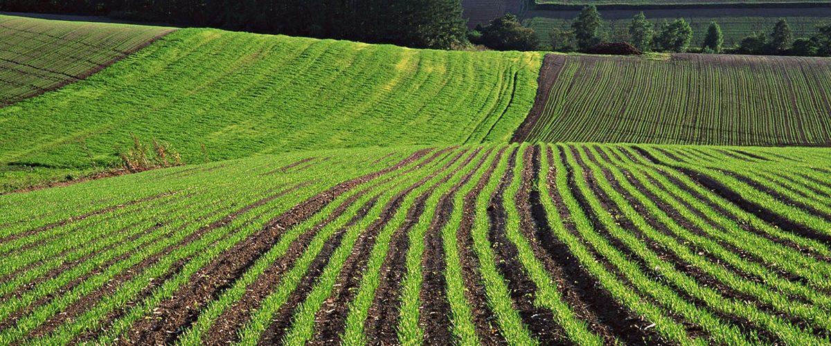 Как оформить землю в собственность если ей пользовалисьбольше 20 лет